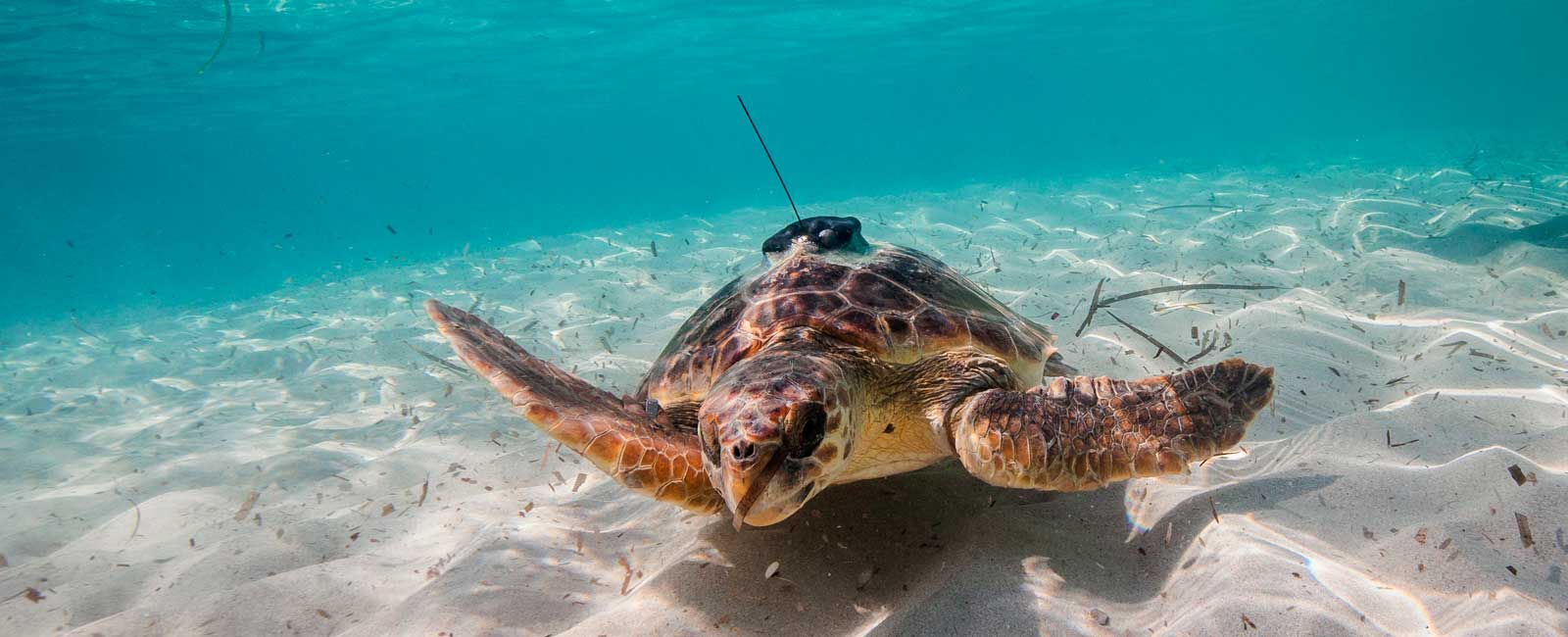 tortugas_oceanografas_noticia_1600x650_