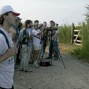 FBBVA-biocon-2006-BALEARES-ORNITOLOGIA