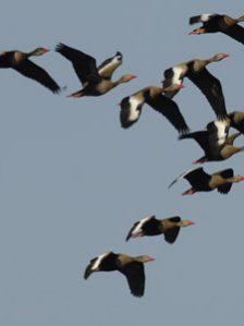FBBVA-biocon-2011-BIRDLIFE