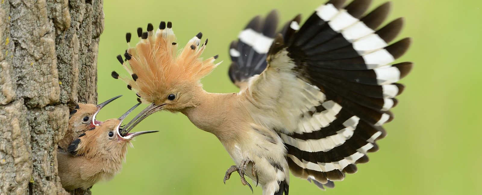 Las Aves Vuelven Al Teléfono Móvil A Través De La App Más Completa Dedicada A La Ornitología En España Biophilia
