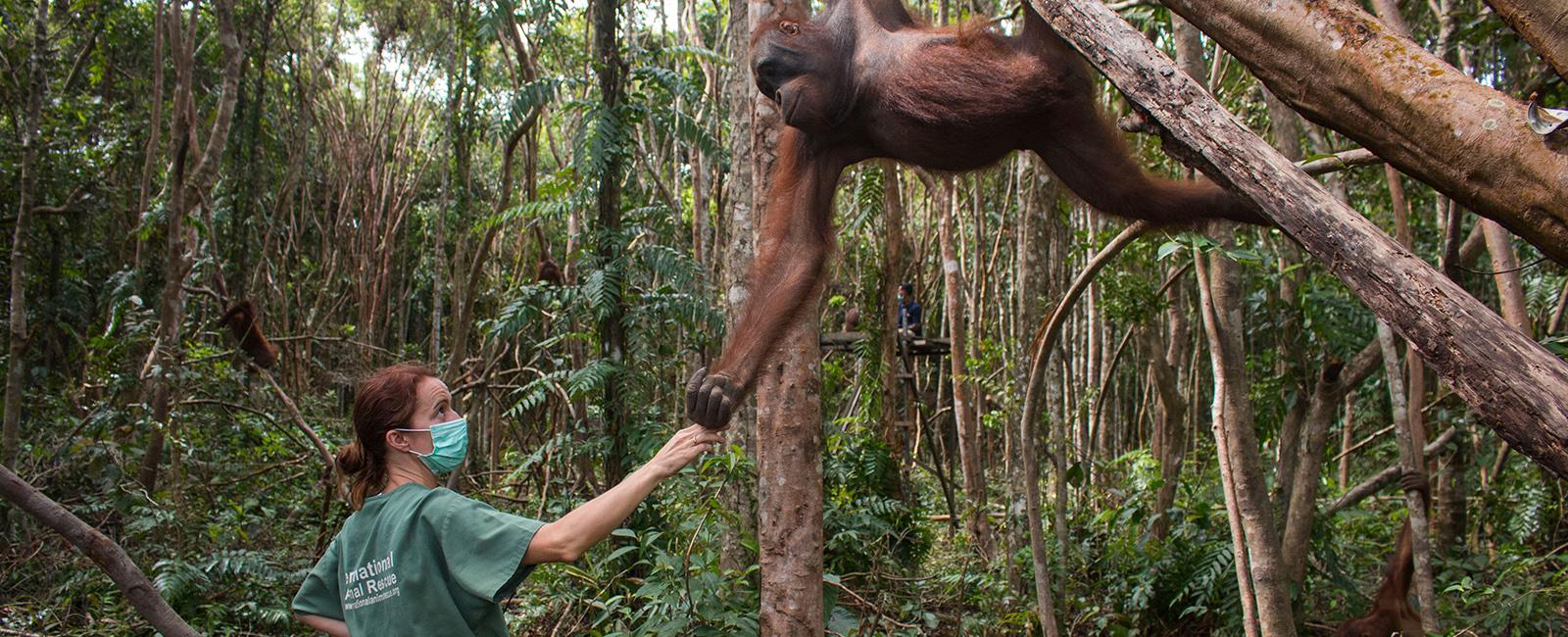 Karmele and orangutan 1600×650