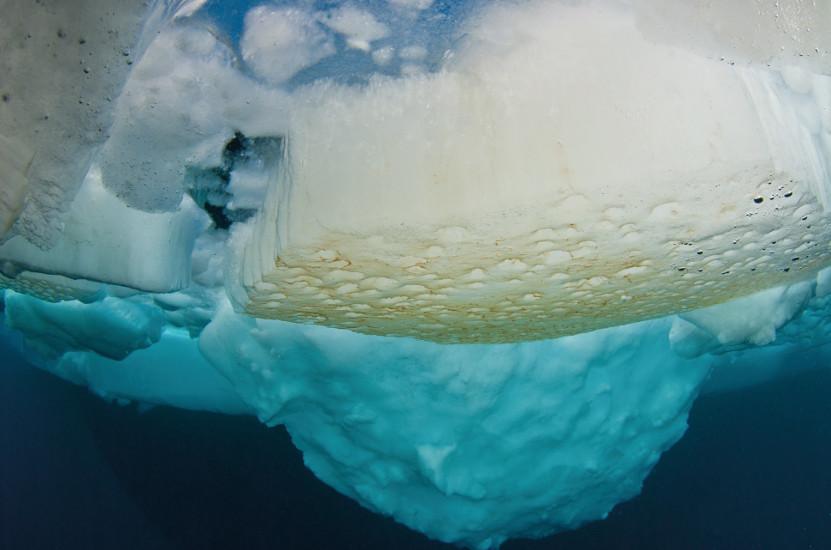 Algas marinas recubren la parte inferior del hielo en el Ártico. © P. Leopold