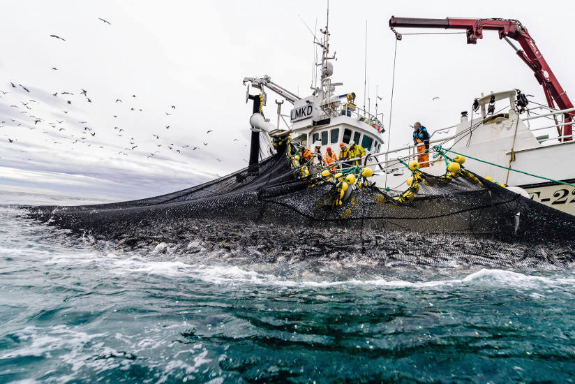 Pesca del arenque en las costas del norte de Noruega. © Norwegian Seafood Council